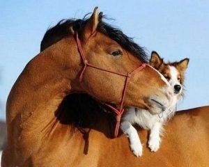 horse_dog_184ssbj-184ssdm